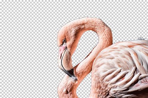 Image détourée du flamant rose