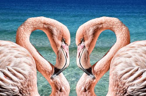 Image avec les flamants roses face à face